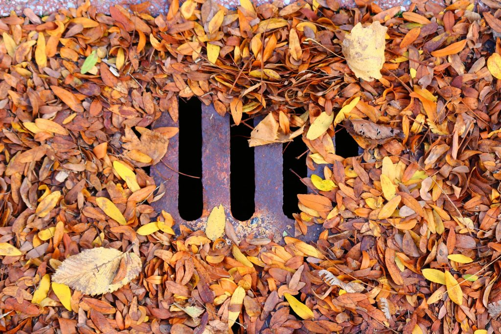 Blocked drain with leaves